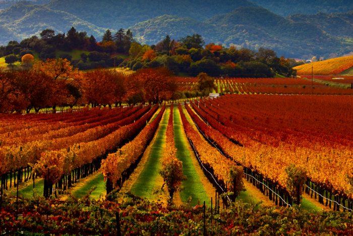 10. Napa Vineyards