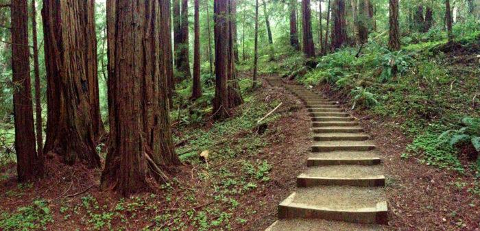 8. Muir Woods, Mill Valley