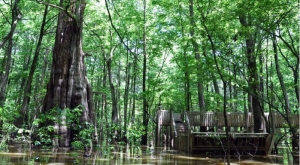 10 Once-In-A-Lifetime Adventures You Can Only Have In Mississippi