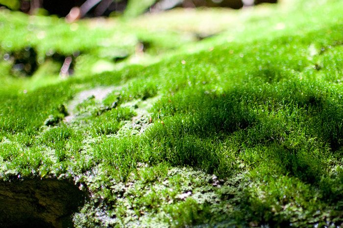 Moss covers many of the rocks, making everything a stunning green.