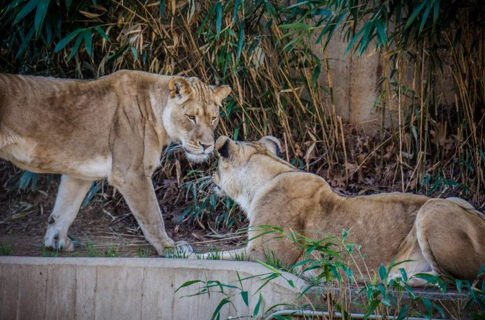 3. The National Zoo