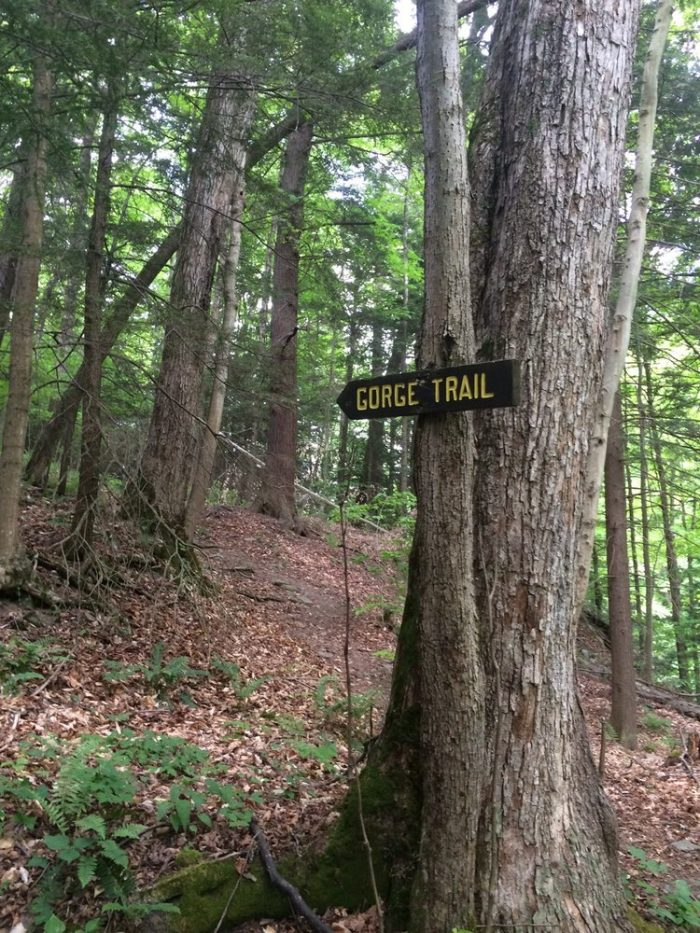 Inside of the park you'll find several miles of hiking trails that will bring you into the beautiful and dense woods.