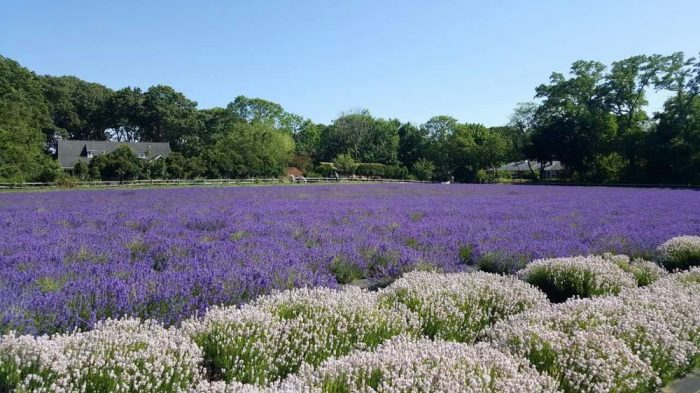 Throughout the entire year there are about three periods during which you can see the farm in full bloom.