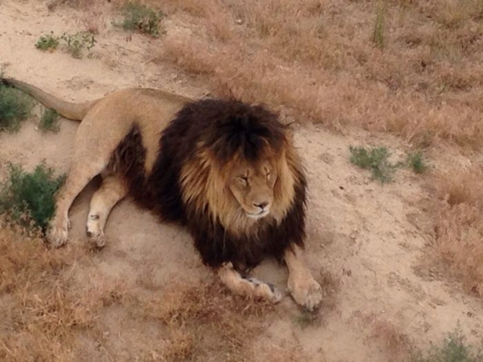 11. The Wild Animal Sanctuary (Keenesburg)