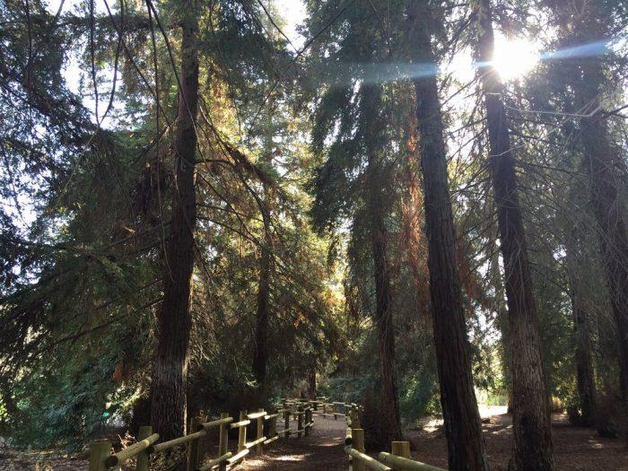 1. Coastal Redwoods