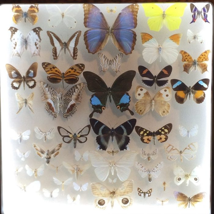 9) Butterfly Collection at New Orleans Insectarium, 423 Canal St.