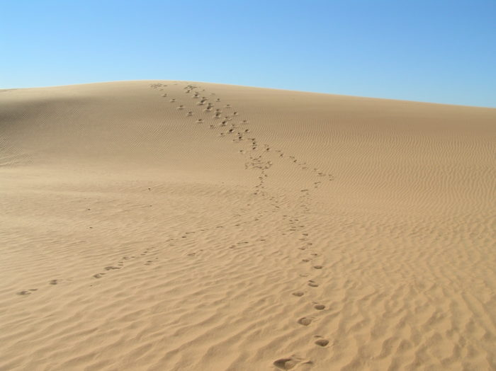 The dunes range in height from 25 feet to 75 feet tall.