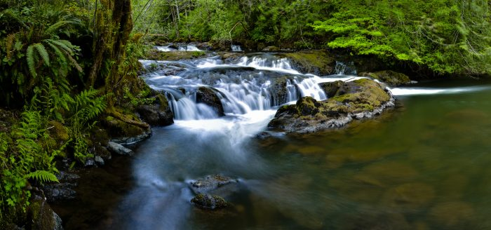 4. Go for a hike or wade into the ocean at the Olympic Peninsula