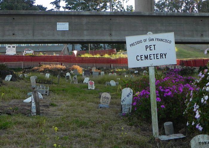 19. Pet Cemetery