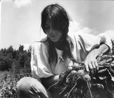 14.  Woman Picking Beets.