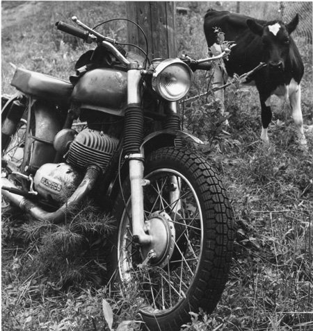 3.  Motorcycle and Cow.