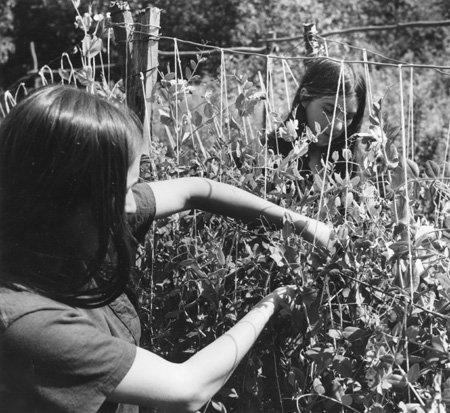 6.  Two Women Picking Beans.