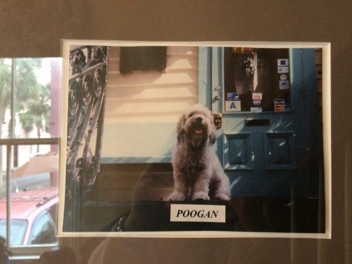 poogan-2