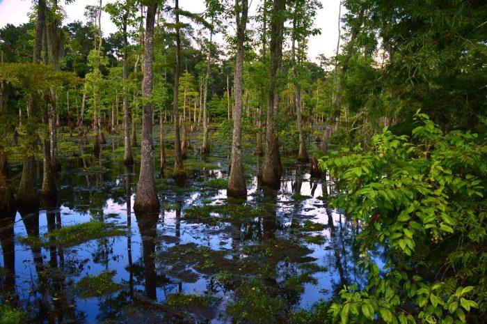 7. Sam Houston State Park