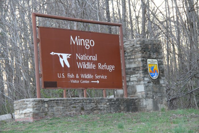 Located in Puxico, in the south of the state, the Mingo National Wildlife Refuge was founded in 1944 under the Migratory Bird Treaty Act.