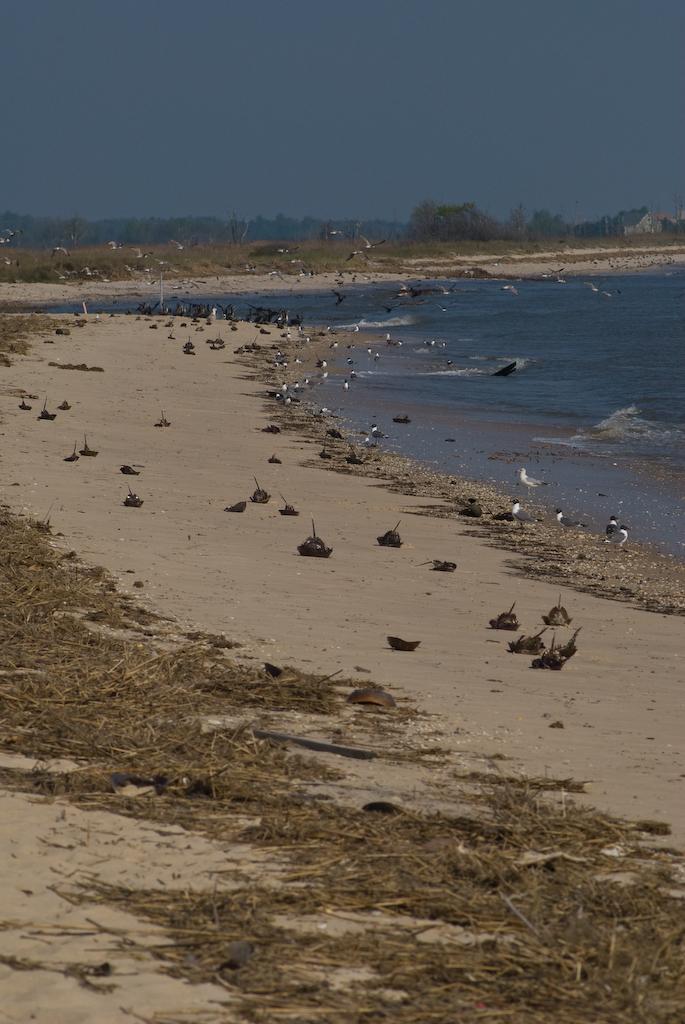 4. Slaughter Beach - Milford, DE
