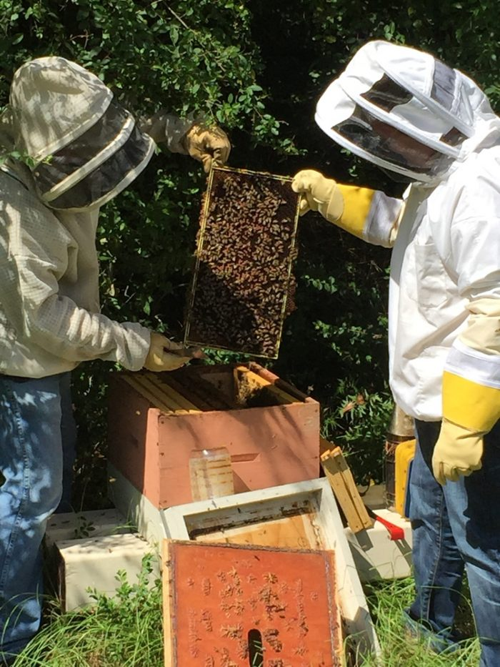 The monks also have a honey bee program, with 20 active hives.