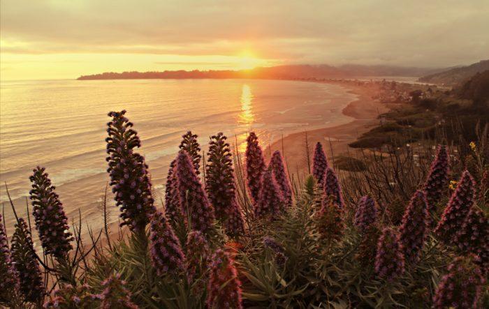 1. Marin Headlands, Muir Woods, Mount Tamalpais & Stinson Beach