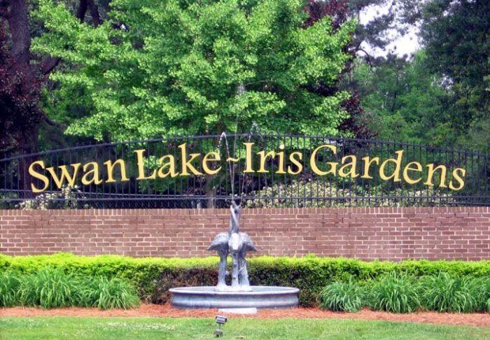 4. Swan Lake / Iris Gardens - Sumter, SC