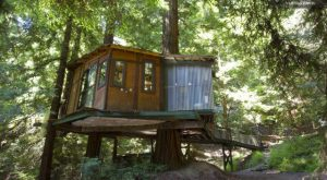 These 5 Treehouses In Northern California Will Give You An Unforgettable Experience