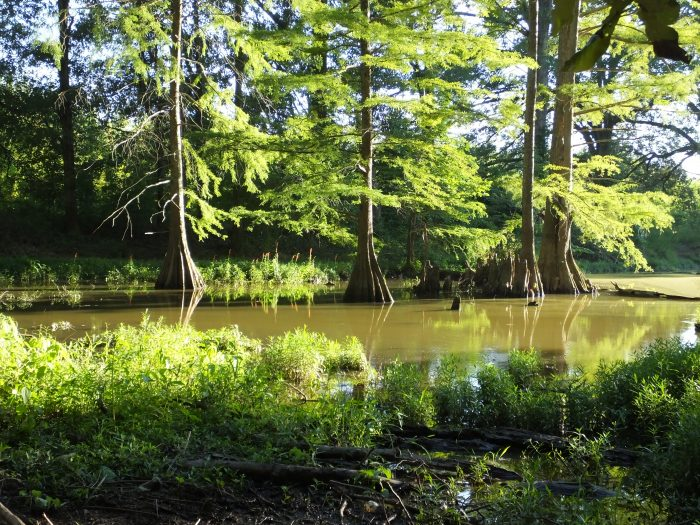 The spot is located in Mingo Basin, what was once, many moons ago, a channel of the Mississippi River.