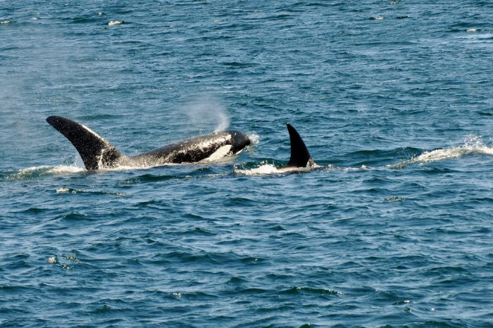 7. Go for a whale watching cruise