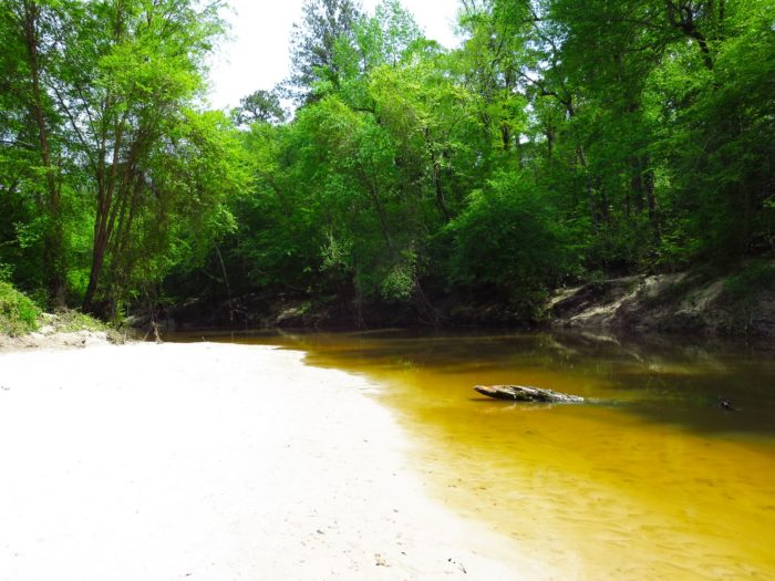 For a truly fantastic day in the water with the whole family, visit Kisatchie Bayou.