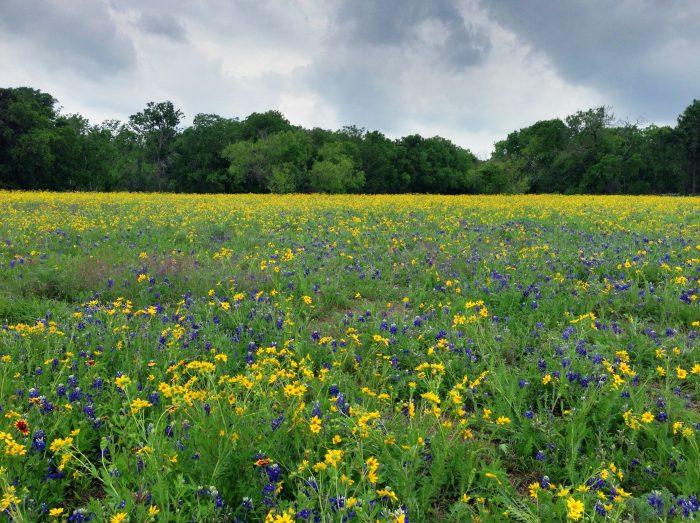 Wildflower season never looked better.