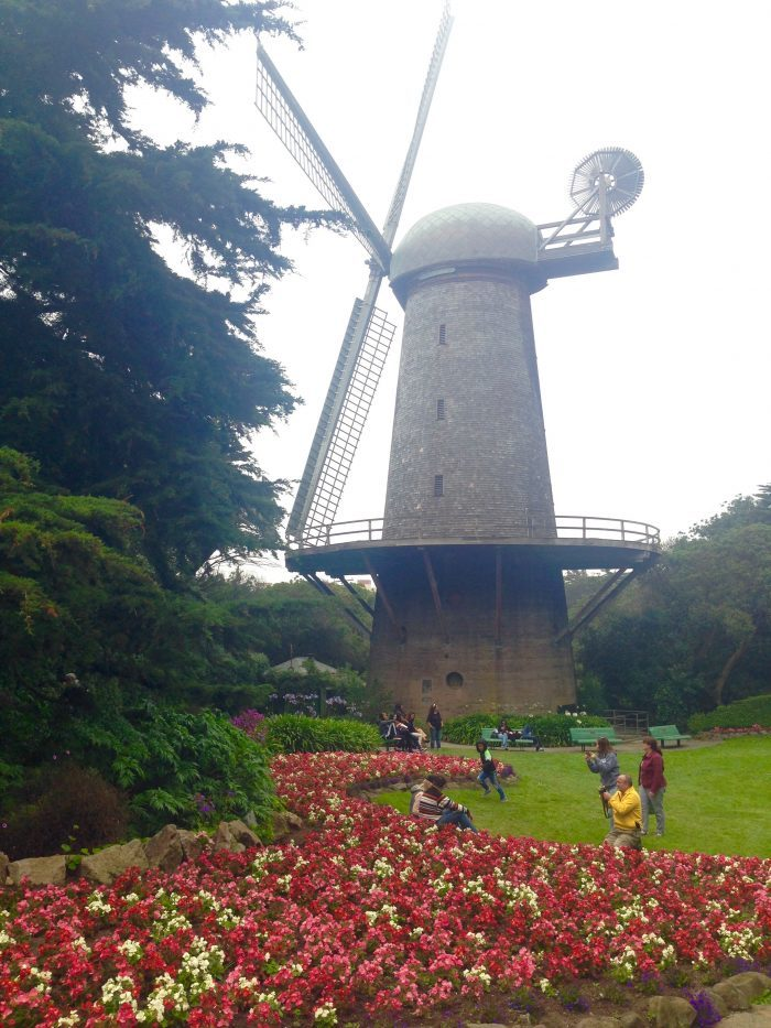 4. Explore Golden Gate Park's many awesome nooks and crannies, from the Dutch windmills to the Conservatory of Flowers to Strawberry Hill and Stow Lake.