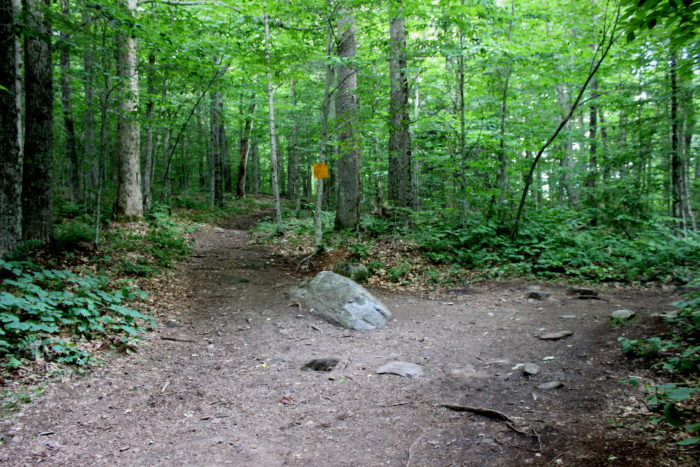 The part of the trail where visitors often get confused, you'll want to go to the right when you see the trail split here.
