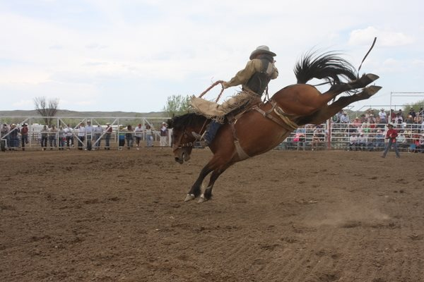 6.  The Miles City Bucking Horse Sale proves Eastern Montanans know how to have a good time.