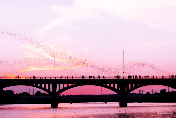 You can stand on the bridge and watch their emergence from above...