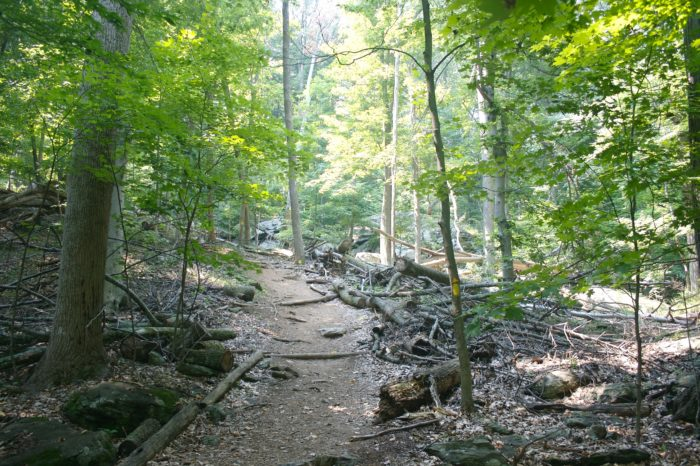 The best part of Cunningham Falls State Park is that a gorgeous natural wonder is a very brief hike away.