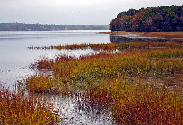 3. Hike through the salt marshes in Great Bay National Wildlife Refuge in Newington.