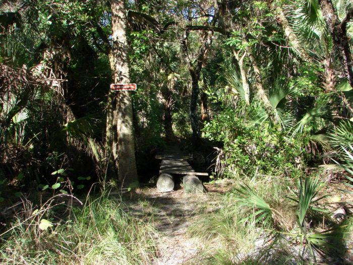 4. Kitching Creek Loop, Jonathan Dickinson State Park