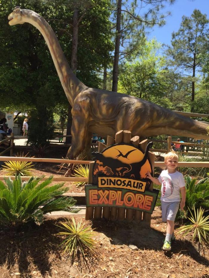 The Dinosaur Explore exhibit is currently open at Wild Adventures Theme Park.