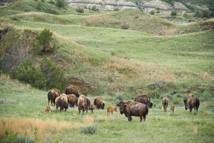 7. Theodore Roosevelt National Park