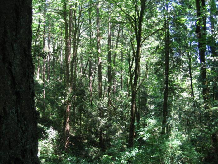 2. Marquam Nature Park Loop