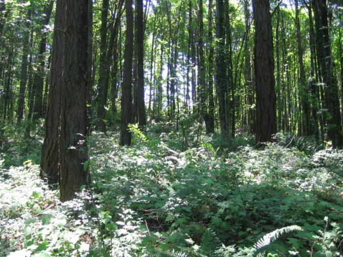 7. Marquam Nature Park Loop