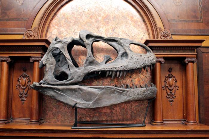 "Meet ""Jim Bob"" the Allosaurus, a ferocious meat-eating predator from the Late Jurassic Period."