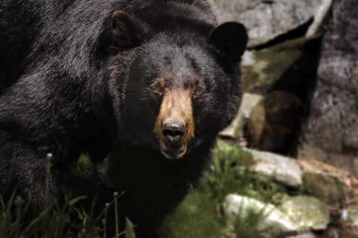 Beware of the killer bear.
