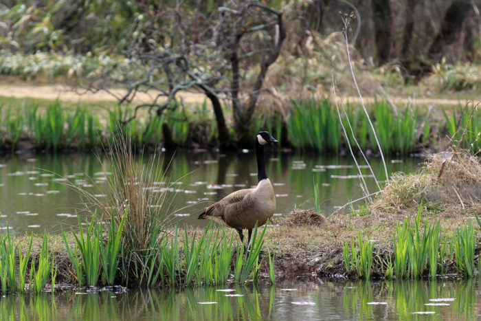 Keep an eye out for animals including many different types of birds, frogs, turtles and other wildlife that live in the park.