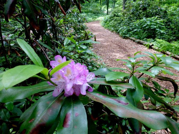 6. Nichols Arboretum (Ann Arbor)
