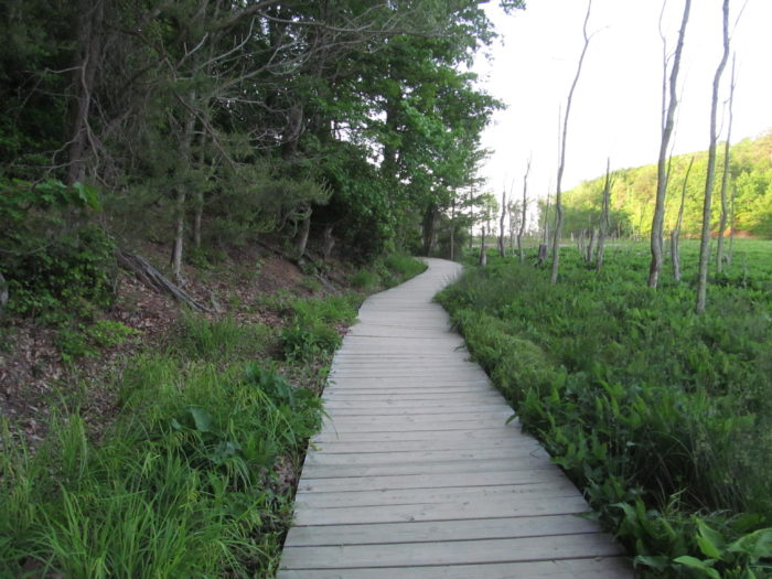 Next, you'll walk on this unique boardwalk that curves around for several yards. You're almost there!