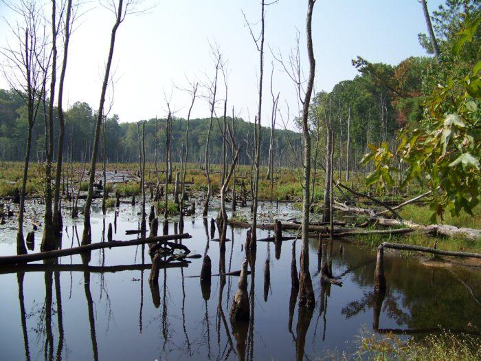 You'll walk alongside marshy water views...