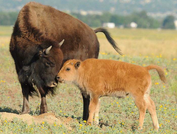 13. Go wildlife watching at Rocky Mountain Arsenal National Wildlife Refuge.