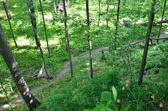 13. Wildflower Trails – Raccoon Creek State Park