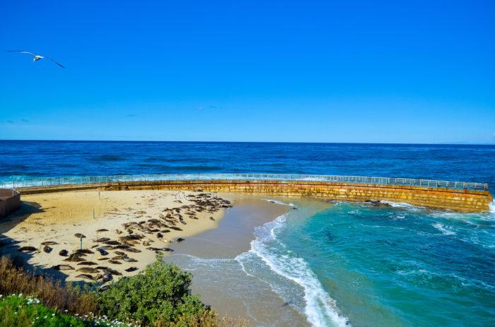4. Children's Pool Beach/Sea Lion Cove