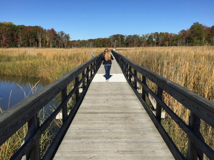 2. Delaware National Estuarine Research Reserve at Blackbird Creek or St. Jones River