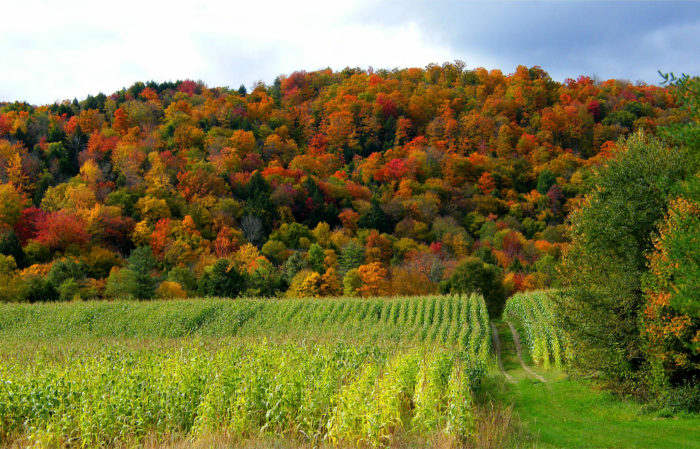 7.  Tell us you've seen better foliage elsewhere.